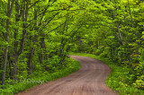 83.7 - Sawtooth:  Spring Greens