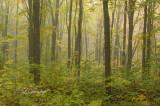 86.41 - Sawtooth:  Foggy Autumn Woods