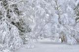 58.72 - Winter Lace