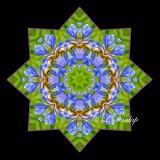 * Wild Iris -- Northwoods Kaleidoscope