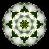 * Trillium -- Northwoods Kaleidoscope