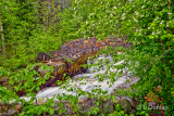 * 3.2 - Duluth Parks:  Kingsbury Creek In Spring With Apple Blossoms