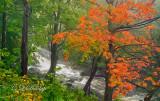 12.2 - Duluth Parks: Miller Creek: Red Maple