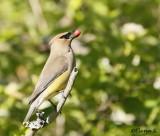 Common birds /  Las aves comunes