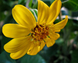 test flower_8x10_web.jpg