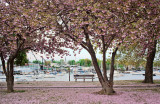 337, Harbor Island Park, Mamaroneck