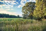 369, Marshlands Conservancy, Rye