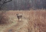 429, Marshlands Conservancy, Rye