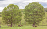 440, Sunnyfield Farm, Bedford