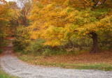 487, Autumn at Ward Pound RIdge