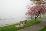 499, Harbor Island Park, Mamaroneck