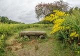 517, Goldenrod, Marshlands Conservancy, Rye