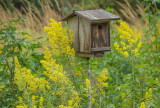 518, Birdhouse, Marshlands Conservancy