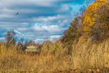 525, Marshlands, Rye