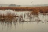 531, Marshlands, Rye
