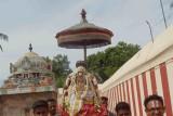 Kaatumannar Koil -Sriman Nathamunigal Tiruavatara Utsavam 2016