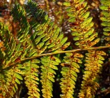 Part I Autumnal fern
