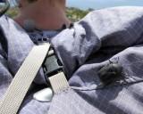 Hitch hiker beetle
