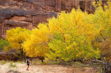 Autumnal colours in Horseshoe canyon