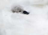 animals_feathered