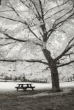 IR Park Tree