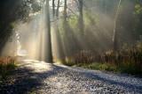 Sun and Light