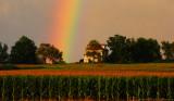 Rainbow over Corn Field