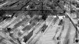 Neighborhood Snow in Black & White