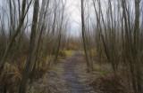 Elam Bend Pathway