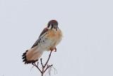 Oiseaux Janvier-Février 2014