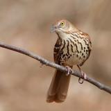 Oiseaux Mars-Avril 2014