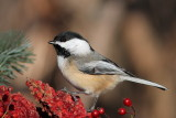 Oiseaux Janvier-Février 2015