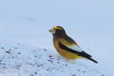 Oiseaux Jan-Fév 2017