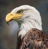 Eagle for JB