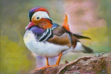 Duck Paint and Pastels by Tana, May, 2016