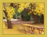 130 14 12 8 Boyce Thompson Arboretum