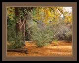 134 14 12 8 Boyce Thompson Arboretum