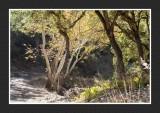 16 11 13 196 Madera Canyon