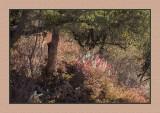 16 11 18 099 San Rafael Valley
