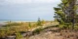 Shoreline Pines