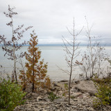 Shoreline Saplings