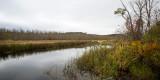 Cattails along Six Mile Lake