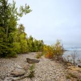 Shoreline Birch and Cedar