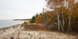 Dune and Birch