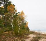 Trees along Lake Huron