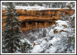 Wintry Spruce Tree House Ruins