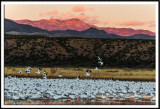 Snow Geese and First Light on the Chupadera Mountains