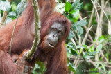 2006 - Borneo