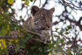 2005 - South Africa - Special Leopards