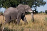 2006 - Botswana (Okavango Delta)